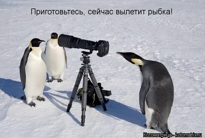Котоматрица: Приготовьтесь, сейчас вылетит рыбка!