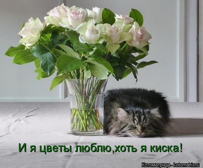 Котоматрица: И я цветы люблю,хоть я киска!