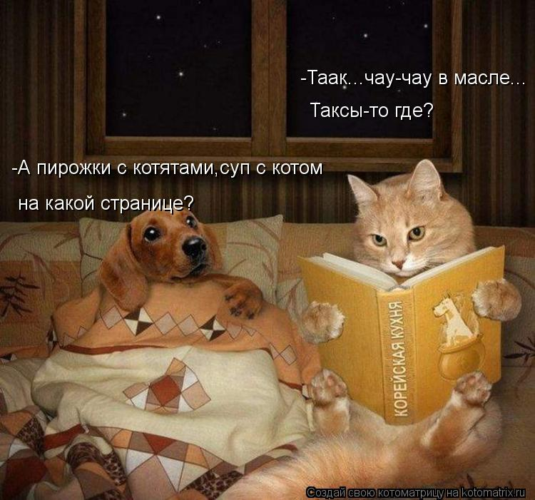 Котоматрица: -Таак...чау-чау в масле...   Таксы-то где? на какой странице? -А пирожки с котятами,суп с котом