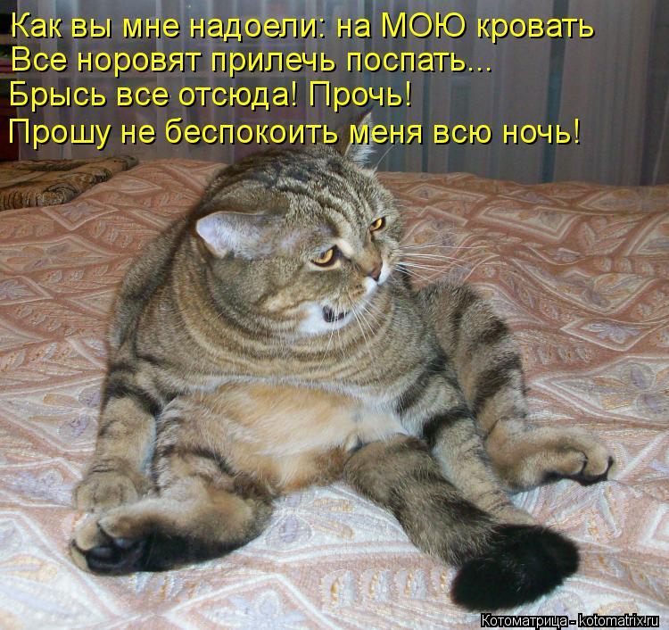 Котоматрица: Как вы мне надоели: на МОЮ кровать Все норовят прилечь поспать... Брысь все отсюда! Прочь! Прошу не беспокоить меня всю ночь!