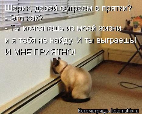 кот у стены