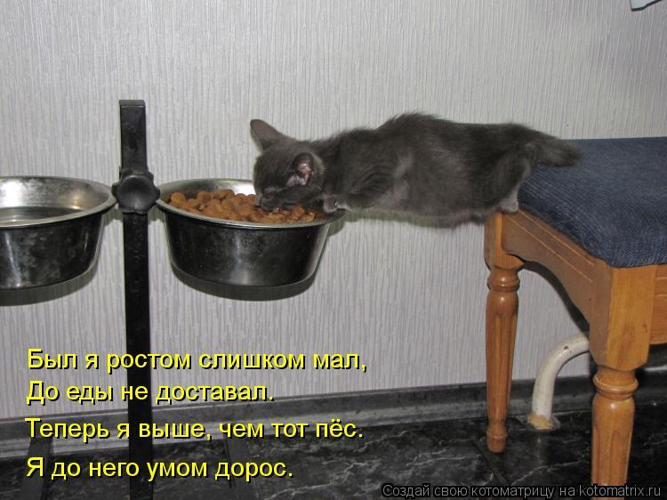 Котоматрица: Был я ростом слишком мал, До еды не доставал. Теперь я выше, чем тот пёс. Я до него умом дорос.