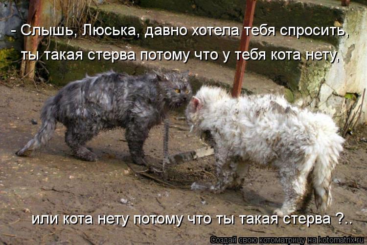 Котоматрица: или кота нету потому что ты такая стерва ?.. - Слышь, Люська, давно хотела тебя спросить, ты такая стерва потому что у тебя кота нету,