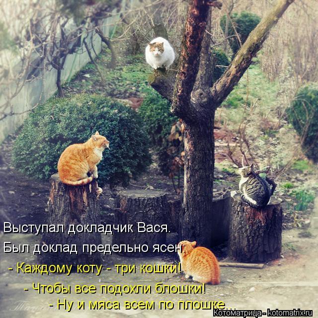 Котоматрица: Выступал докладчик Вася. Был доклад предельно ясен: - Каждому коту - три кошки! - Чтобы все подохли блошки! - Ну и мяса всем по плошке...