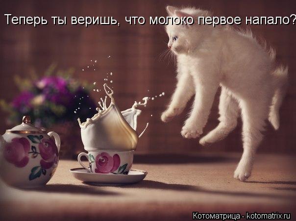 Котоматрица: Теперь ты веришь, что молоко первое напало?!
