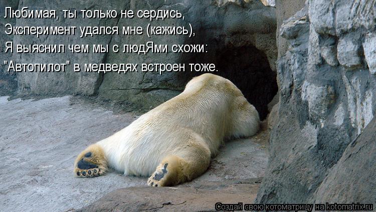 """Котоматрица: Любимая, ты только не сердись, Эксперимент удался мне (кажись), Я выяснил чем мы с людЯми схожи: """"Автопилот"""" в медведях встроен тоже."""