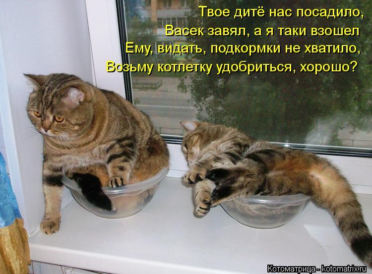 Котоматрица: Твое дитё нас посадило, Васек завял, а я таки взошел Ему, видать, подкормки не хватило, Возьму котлетку удобриться, хорошо?
