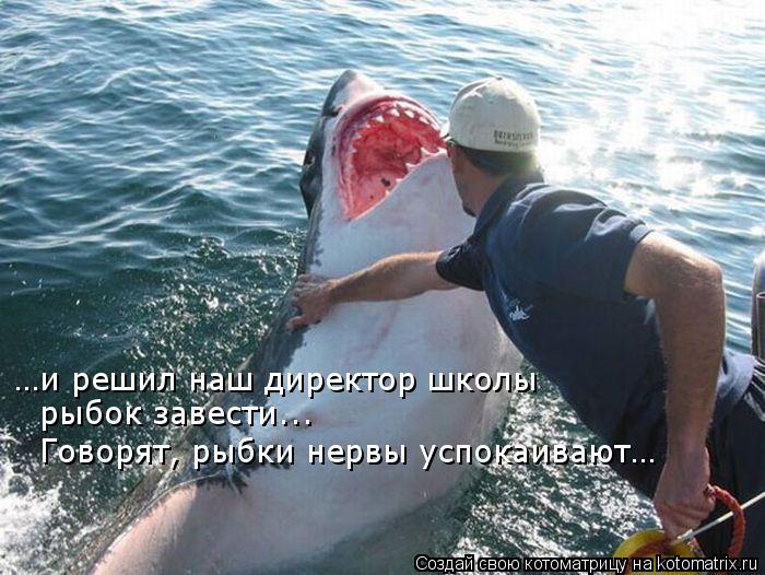 Котоматрица: …и решил наш директор школы рыбок завести... Говорят, рыбки нервы успокаивают…