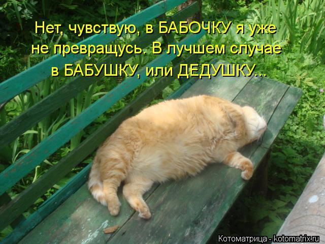 Котоматрица: Нет, чувствую, в БАБОЧКУ я уже  не превращусь. В лучшем случае в БАБУШКУ, или ДЕДУШКУ...