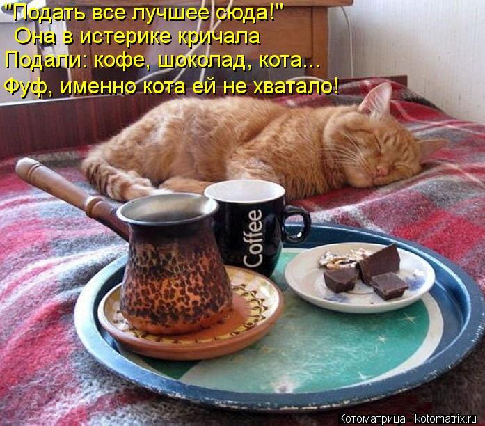 """Котоматрица: """"Подать все лучшее сюда!"""" Она в истерике кричала Подали: кофе, шоколад, кота... Фуф, именно кота ей не хватало!"""