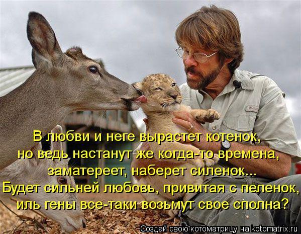 Котоматрица: В любви и неге вырастет котенок, но ведь настанут же когда-то времена, заматереет, наберет силенок... Будет сильней любовь, привитая с пелено