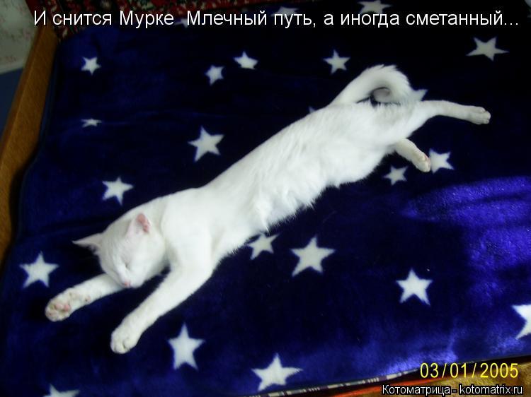 Котоматрица: И снится Мурке  Млечный путь, а иногда сметанный...