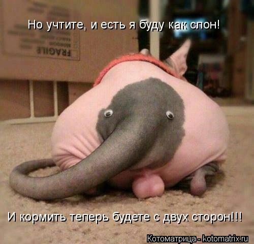 Котоматрица: Но учтите, и есть я буду как слон! И кормить теперь будете с двух сторон!!!