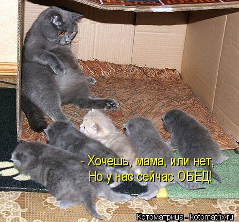 Котоматрица: - Хочешь, мама, или нет, Но у нас сейчас ОБЕД!