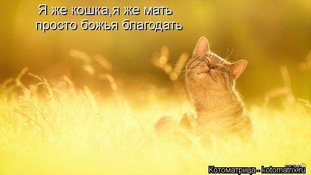 Котоматрица: Я же кошка,я же мать просто божья благодать
