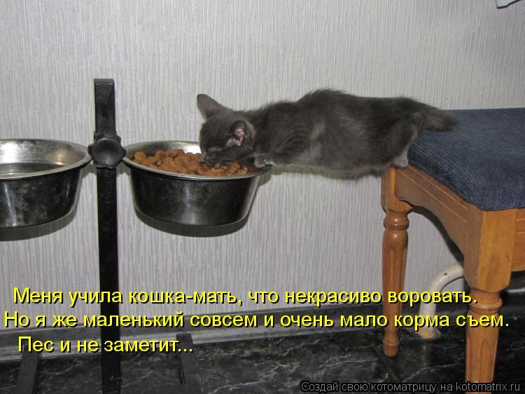 Котоматрица: Меня учила кошка-мать, что некрасиво воровать. Но я же маленький совсем и очень мало корма съем. Пес и не заметит...