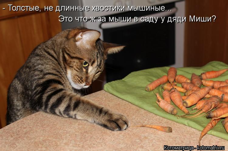 Котоматрица: - Толстые, не длинные хвостики мышиные... Это что ж за мыши в саду у дяди Миши?