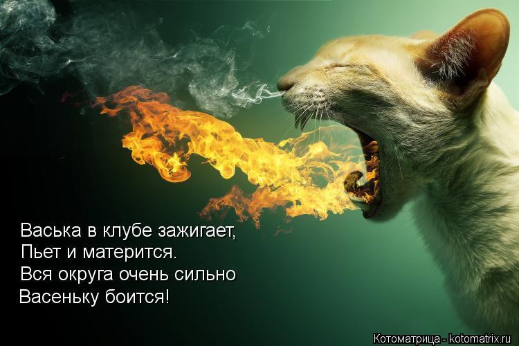 Котоматрица: Васька в клубе зажигает, Пьет и матерится. Вся округа очень сильно Васеньку боится!