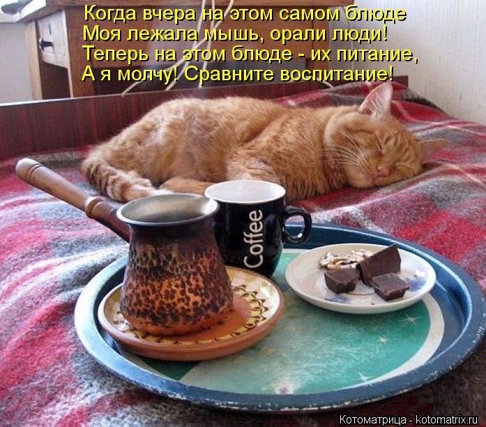 Котоматрица: Когда вчера на этом самом блюде Моя лежала мышь, орали люди! Теперь на этом блюде - их питание, А я молчу! Сравните воспитание!