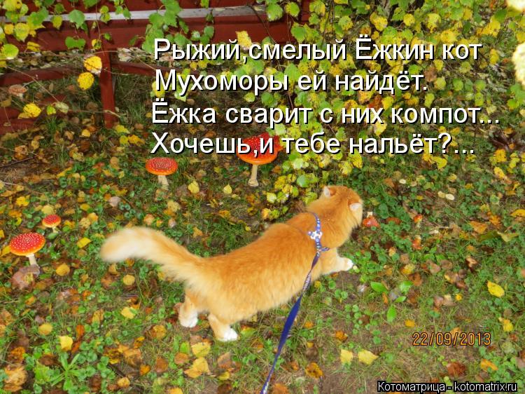 Котоматрица: Рыжий,смелый Ёжкин кот Мухоморы ей найдёт. Ёжка сварит с них компот... Хочешь,и тебе нальёт?...