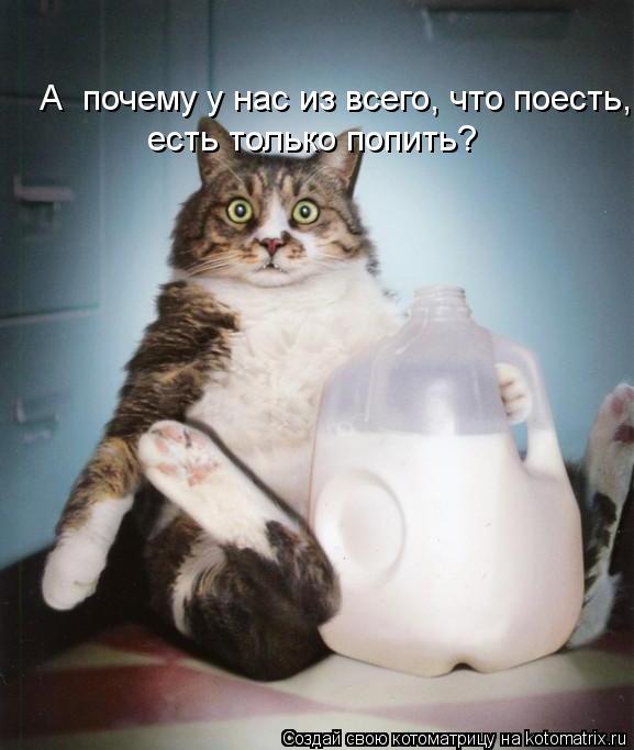 Котоматрица: есть только попить?                                                          А  почему у нас из всего, что поесть,