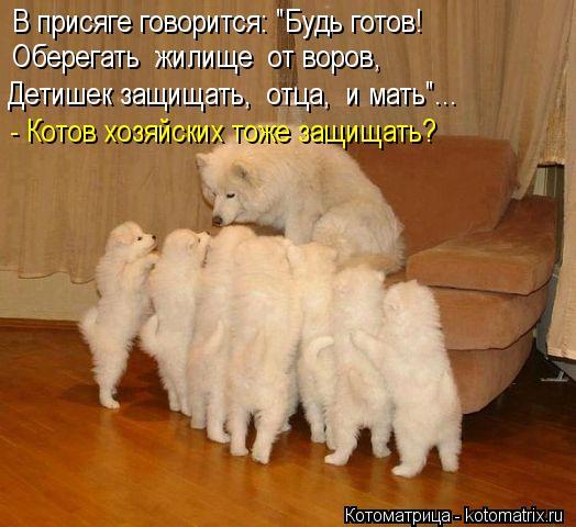 """Котоматрица: В присяге говорится: """"Будь готов! Оберегать  жилище  от воров, Детишек защищать,  отца,  и мать""""... - Котов хозяйских тоже защищать?"""
