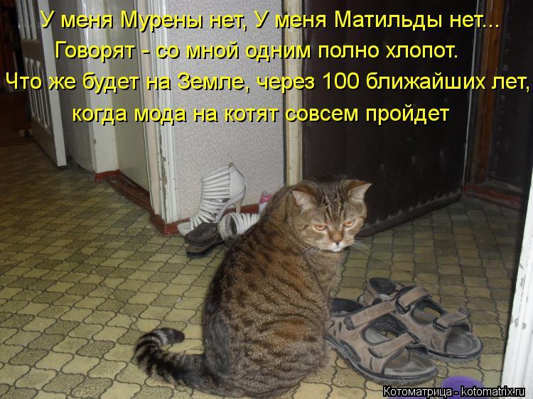 Котоматрица: У меня Мурены нет, У меня Матильды нет... Говорят - со мной одним полно хлопот. Что же будет на Земле, через 100 ближайших лет, когда мода на котя