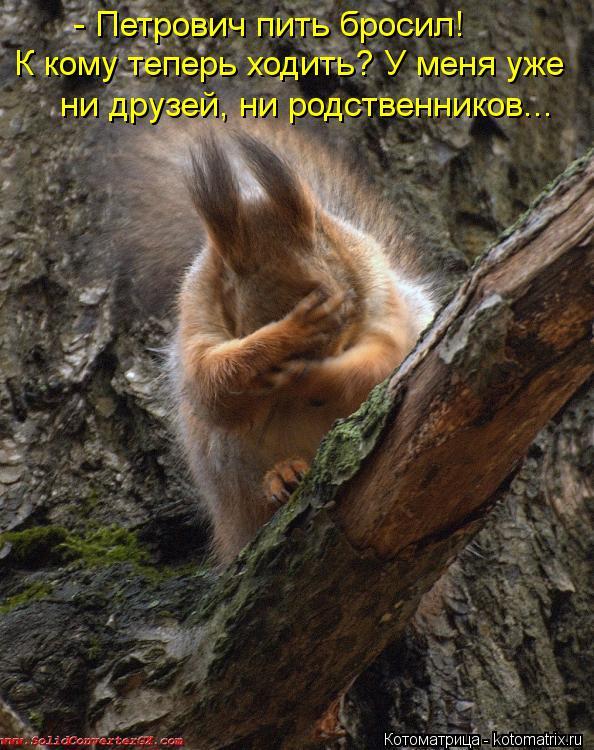 Котоматрица: - Петрович пить бросил! К кому теперь ходить? У меня уже ни друзей, ни родственников...