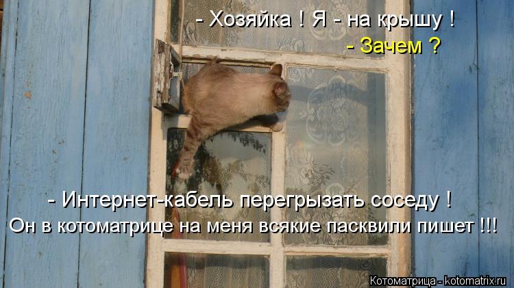 Котоматрица: - Хозяйка ! Я - на крышу ! - Зачем ? - Интернет-кабель перегрызать соседу ! Он в котоматрице на меня всякие пасквили пишет !!!