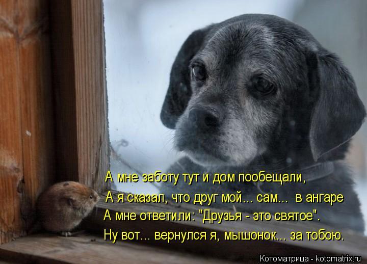 """Котоматрица: А я сказал, что друг мой... сам...  в ангаре А мне заботу тут и дом пообещали, Ну вот... вернулся я, мышонок... за тобою. А мне ответили: """"Друзья - это"""