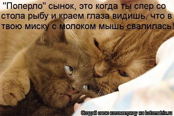 """Котоматрица: """"Поперло"""" сынок, это когда ты спер со  стола рыбу и краем глаза видишь, что в твою миску с молоком мышь свалилась!"""