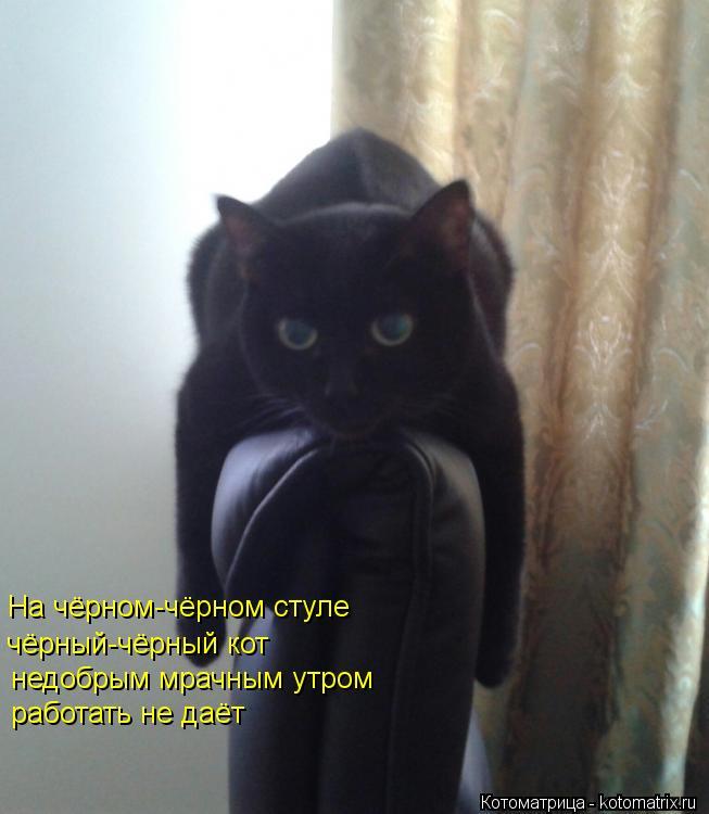 Котоматрица: На чёрном-чёрном стуле чёрный-чёрный кот недобрым мрачным утром работать не даёт
