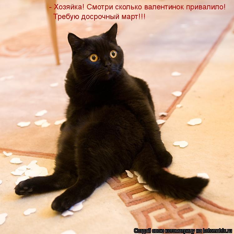 Котоматрица: - Хозяйка! Смотри сколько валентинок привалило! Требую досрочный март!!!