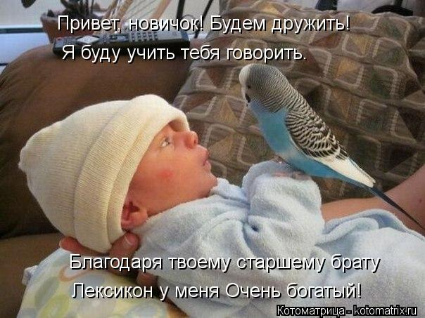 Котоматрица: Благодаря твоему старшему брату Привет, новичок! Будем дружить! Я буду учить тебя говорить. Лексикон у меня Очень богатый!