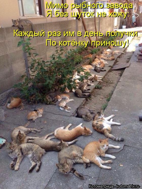 Котоматрица: Мимо рыбного завода Я без шуток не хожу: Каждый раз им в день получки По котёнку приношу!