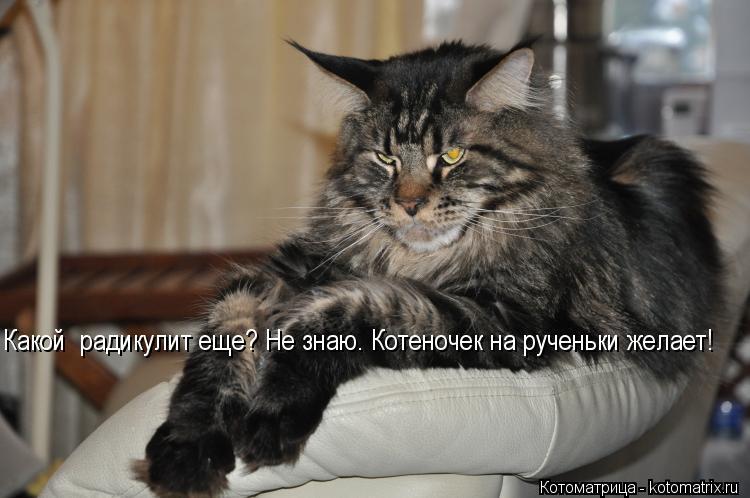 Котоматрица: Какой  радикулит еще? Не знаю. Котеночек на рученьки желает!