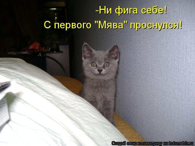 """Котоматрица: -Ни фига себе! С первого """"Мява"""" проснулся!"""