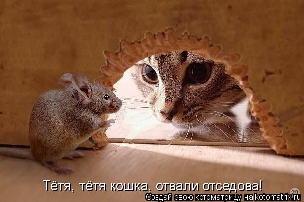 Котоматрица: Тётя, тётя кошка, отвали отседова!