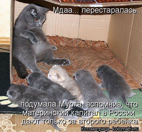 Котоматрица: Мдаа... перестаралась... подумала Мурка, вспомнив, что материнский капитал в России дают только за второго ребенка