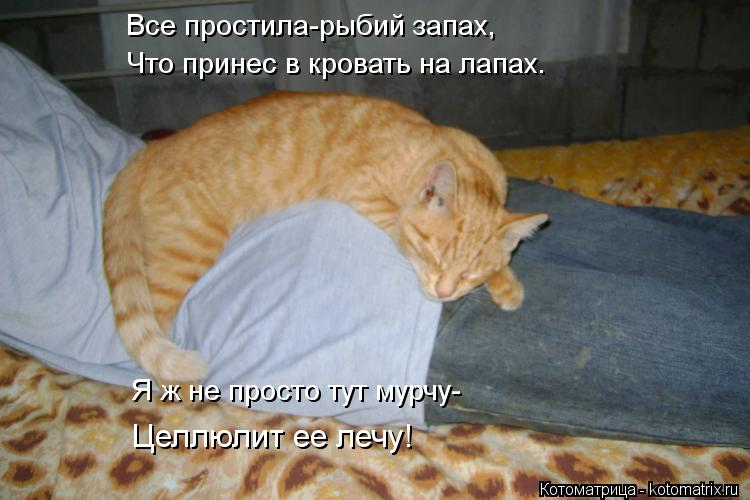 Котоматрица: Все простила-рыбий запах, Что принес в кровать на лапах. Я ж не просто тут мурчу- Целлюлит ее лечу!