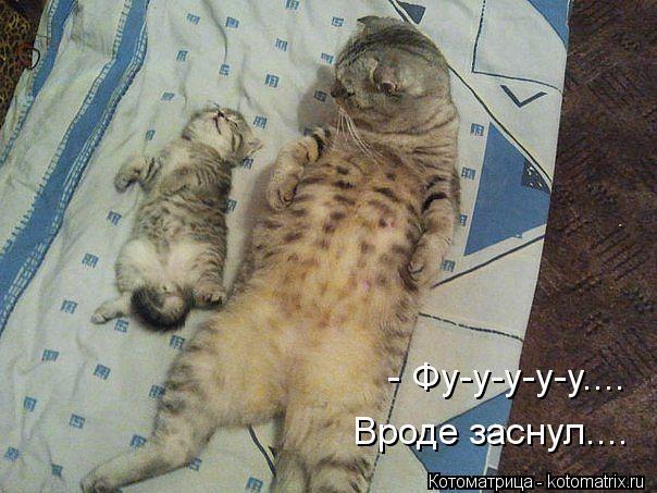 Котоматрица: - Фу-у-у-у-у.... Вроде заснул....