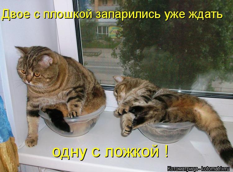 Котоматрица: Двое с плошкой запарились уже ждать одну с ложкой !