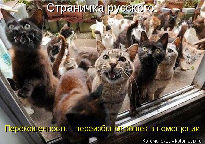 Котоматрица: Страничка русского: Перекошенность - переизбыток кошек в помещении.