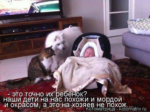 Котоматрица: - это точно их ребёнок? наши дети на нас похожи и мордой  и окрасом, а это на хозяев не похож...