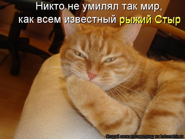 Котоматрица: Никто не умилял так мир, как всем известный рыжий Стыр рыжий Стыр