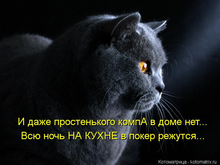 Котоматрица: И даже простенького компА в доме нет... Всю ночь НА КУХ Всю ночь НА КУХНЕ в покер режутся...