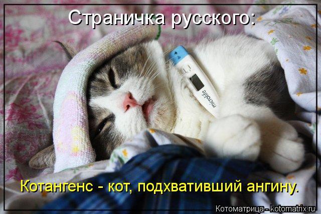 http://kotomatrix.ru/images/lolz/2013/10/04/kotomatritsa_D2.jpg