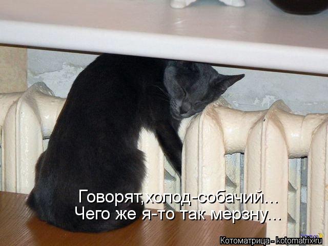 Котоматрица: Говорят,холод-собачий... Чего же я-то так мерзну...