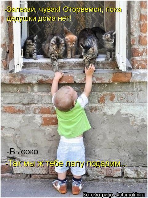 Котоматрица: -Залезай, чувак! Оторвемся, пока  дедушки дома нет! -Высоко... -Так мы ж тебе лапу подадим...