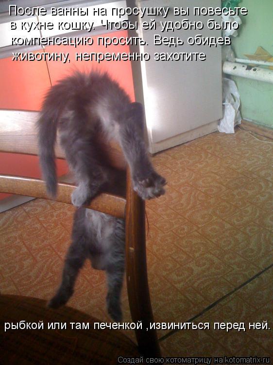 Котоматрица: рыбкой или там печенкой ,извиниться перед ней. После ванны на просушку вы повесьте в кухне кошку. Чтобы ей удобно было  компенсацию просить.